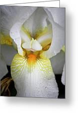 White Iris Study No 1 Greeting Card