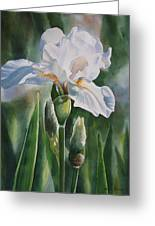 White Iris With Bud Greeting Card by Sharon Freeman