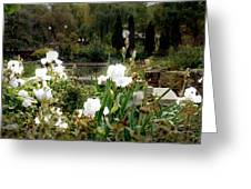 White Irises Greeting Card
