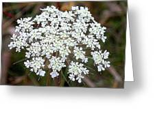 White Lace Greeting Card