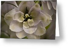 White Larkspur Close Up By Jean Noren Greeting Card