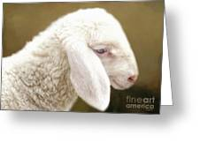 White Lashes Greeting Card
