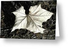 White Leaf On The Ground Greeting Card