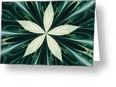 White Leaves In A Green Forest Kaleidoscope Greeting Card