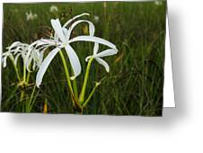 White Lilies In Bloom Greeting Card