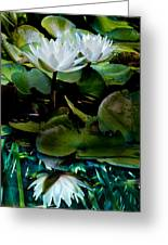 White Lilies, White Reflection Greeting Card