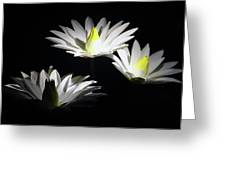 White Lillies Greeting Card