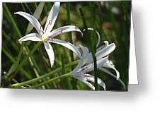 White Lillies Greeting Card