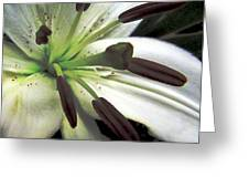 White Lilly Equalized Greeting Card
