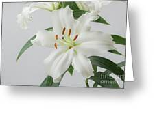 White Lily 2 Greeting Card