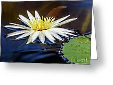 White Lily On Pond Greeting Card