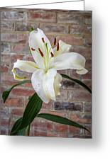 White Lily Portrait Greeting Card