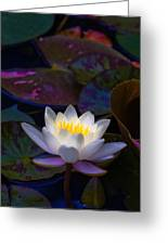 White Lily Rising Greeting Card