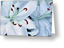 White Lily Triptych Part1 Greeting Card