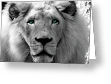 White Lion Hue Greeting Card