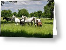 White Lipizzaner Mares Horse Breed With Dark Foals Grazing In A  Greeting Card