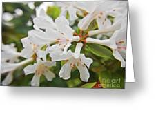 White Love 3 Greeting Card