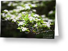 White Love 6 Greeting Card
