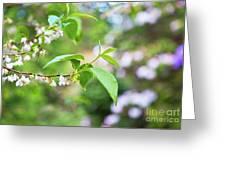 White Love 8 Greeting Card