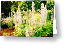 White Lupins Greeting Card