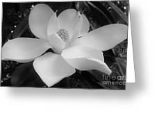 White - Magnolia - Beauty Greeting Card