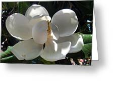 White Magnolia Flower 01 Greeting Card