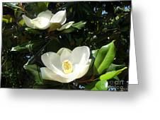 White Magnolia Flowers 01 Greeting Card