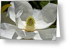 White Magnolia Macro  Greeting Card