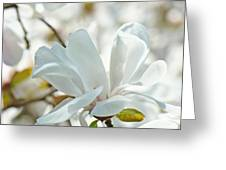 White Magnolia Tree Flower Art Prints Magnolias Baslee Troutman Greeting Card