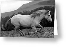 White Mare Gallops #1 -  Close Up Black And White Greeting Card