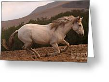White Mare Gallops #1 -  Close Up Brighter Greeting Card