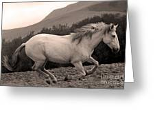 White Mare Gallops #1 -  Close Up Sepia Greeting Card