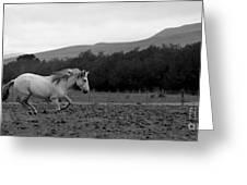 White Mare Gallops #1 - Panoramic Black And White Greeting Card