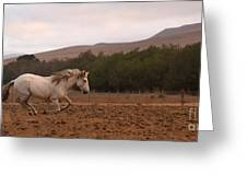 White Mare Gallops #1 - Panoramic Brighter Greeting Card