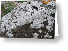 White Moss Greeting Card