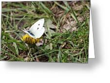White Moth Greeting Card