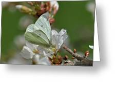 White Moth On Blossom Greeting Card