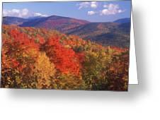 White Mountain Foliage Bear Notch Greeting Card