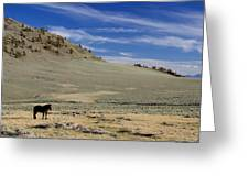 White Mountain Horse Greeting Card