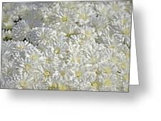 White Mums Greeting Card
