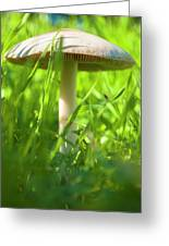 White Mushroom #2 Greeting Card