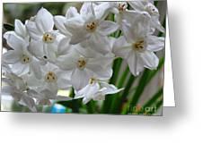 White Narcissi Spring Flower 2 Greeting Card