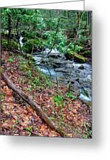 White Oak Run In Spring Greeting Card