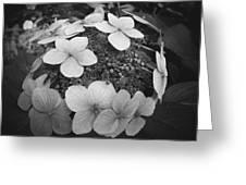 White On Black Hydrangea Petals Greeting Card
