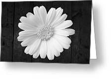 White On Wood Greeting Card