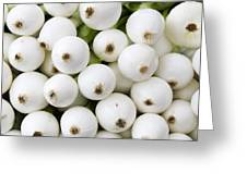 White Onions Greeting Card by John Trax