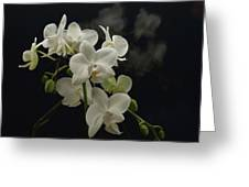 White Orchid And Reflection Greeting Card