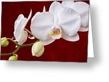 White Orchid Closeup Greeting Card