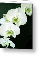 White Orchid Elegance Greeting Card