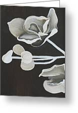 White Orchid First Section Greeting Card